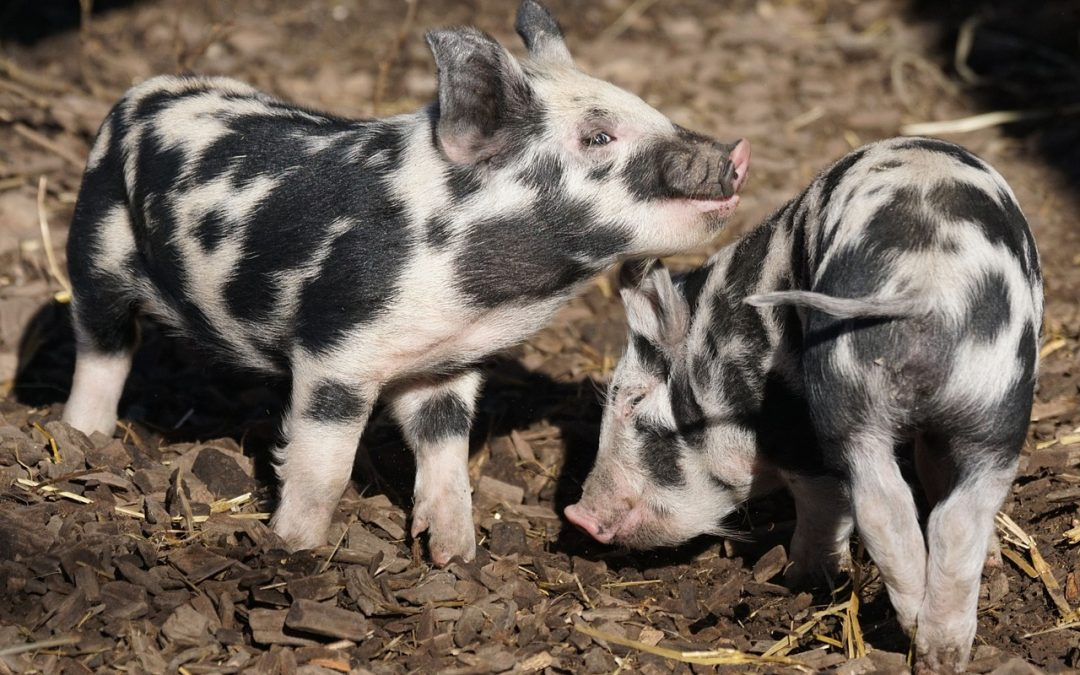 España: bases zootécnicas para el cálculo de emisiones en ganadería